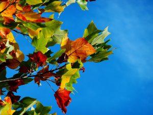 秋の景色2